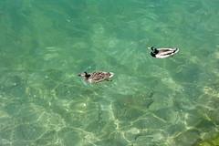 Petit Port @ Lake Annecy @ Annecy-le-Vieux (*_*) Tags: 2019 spring printemps may annecylevieux annecy 74 hautesavoie france europe savoie petitport lacdannecy lakeannecy