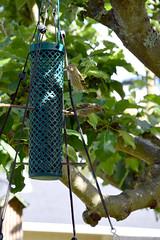 Pine Siskins 550 (Donna's View) Tags: nikon d3300 finch pinesiskin spinuspinus birdfeeder sunflowerseedfeeder sunflowerseeds tree appletree bird