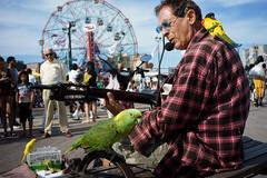 Parrots (dtanist) Tags: nyc newyork newyorkcity new york city sony a7 7artisans 35mm brooklyn coney island boardwalk denos wonder wheel busker busking music musician guitar guitarist performer parrot parakeet birds owner pets