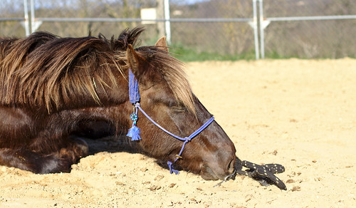Tired horse
