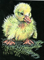 Duckling (Life Imitates Doodles) Tags: postcardsforthelunchbag duck duckling blackpaper animal bird