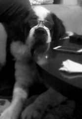 maestra soraya (me, paolo and the seven wonders + two&little3) Tags: cane dog chien perro hund kutya sanbernardo