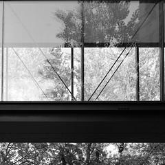 Carré (Guilhem.che) Tags: blackandwhite arbres trees bridge fuji fujixh1 xh1