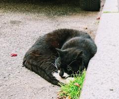 Things I met in Lübeck 9/6 2019. Sleeping beauty (erlingraahede) Tags: lübeck vsco canon sweet sleeping street cat