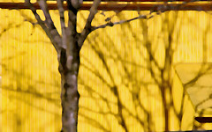 yellow wall (losy) Tags: yellow wall tree shadows losyphotography