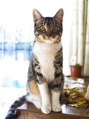 Clara. (Andres Bertens) Tags: 8628 olympusem10markii olympusomdem10markii olympusm25mmf18 olympusmzuikodigital25mmf18 rawtherapee pet cat