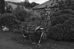Week 23 Shoot an Outdoor Still Life (Carol Dunham) Tags: projectsunday outdoor stilllife