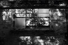 Abandoned lab (a.pierre4840) Tags: olympus omd em10 micro43 cmount schneider kreuznach xenon 25mm f095 bw blackandwhite noiretblanc window shadows bokeh dof depthoffield abandoned derelict ruined dorset england