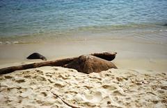 Ilha das Couves (Henrique F. da Silva) Tags: olympusaccura 35mm colorplus200 kodakfilm kodak olympuszoom105 olympusaccura105 pointandshoot ubatuba beach seaside