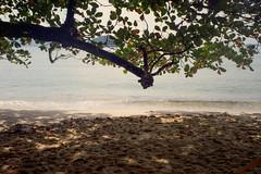 Praia do Felix (Henrique F. da Silva) Tags: olympusaccura 35mm colorplus200 kodakfilm kodak olympuszoom105 olympusaccura105 pointandshoot ubatuba beach seaside
