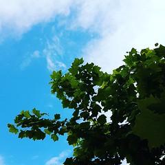 Coton... neux... neuse... (melina1965) Tags: créteil îledefrance juin june 2019 valdemarne arbre arbres tree trees printemps spring ciel sky nuage nuages cloud clouds