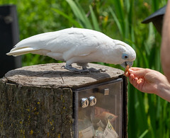 Avifauna (johan wieland) Tags: johanwieland 2019 alphenaanderijn avifauna