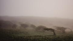 mystic Cornwall (isaak-fotografie) Tags: cornwall england hike goodtimes gooutside hiking visitengland uk neverstopexploring foggy misty coast coastal southwestcoastpath trees nature landscape outdoors