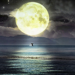 if anyone, the moon would... (1crzqbn) Tags: sliderssunday alaska moon whale tail textures flickrissoslowtodaygrrrrrrr outside 1crzqbn