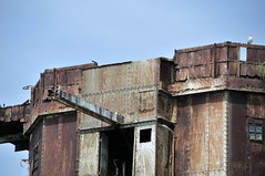 DSC_1583 (Thomas Cogley) Tags: red sands fort maunsell army world war two 2 ii ww2 wwii defence antiaircraft tower metal rust decay river thames sea water old historic project redsand peregrine falcon bird prey history