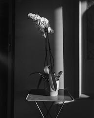 Evening Orchid (gbrammer) Tags: 4x5 arista400 schneidersuperangulon908 v800 copenhagen film hc110 linhof linhoftechnikav
