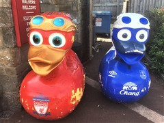 MASSIVE Everton and Liverpool Football Club ducks at the Canal Turn Public House, Carnforth, Lancashire = NOW THATS WHAT YOU CALL A DUCK RACE. !!!!!!! (rossendale2016) Tags: flying wings fantastic extensive menu restaurant chairs tables dining eating food soccer blues reds wow toffees sprayed painted paint gold sponsorship sponsors elephant beaks bills goggles eyes managers players popular sign signs quack iconic icon glassfibre fibre fiber glass manufactured made artistically artistic modelled model plastic water canalside city red blue realistic merseyside top club clubs professional english league premier lancashire carnforth house public turn canal large massove ducks art street clib football liverpool everton