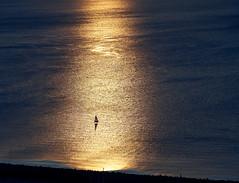_DSC3866 JPEG sRGB (owen galen jones) Tags: sunset seattle washington pugetsound sunsethillpark mountains