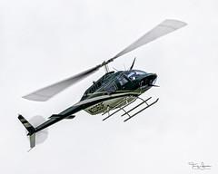 Bell 206B JetRanger III C/N 3688 (N206DF) departing Skagit Regional Airport KBVS, Burlington Washington (Hawg Wild Photography) Tags: bell 206b jetranger iii cn 3688 n206df skagitcountywashington skagitregionalairport kbvs helicopters terrygreen hawg wild photography nikon d850 sigma 150600mm contemporary