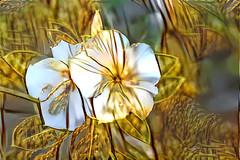 Golden Morning Glory (Carol (vanhookc)) Tags: deepdreamgenerator digitalart digitalprocessing digitalediting painterly ddg