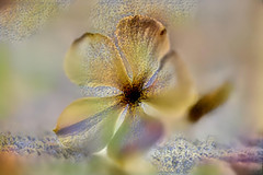 Golden Dust (Carol (vanhookc)) Tags: deepdreamgenerator digitalart digitalprocessing digitalediting painterly ddg