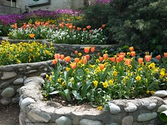 Tulips(Saei Park-Tehran-IRAN) (hamid-golpesar) Tags: tulip tulipflower tulipflowers flower flowers tehran iran colour colourful hamid hamidowaysee hamidgolpesar landscape nature park saeipark saei owaysee outdoor travel