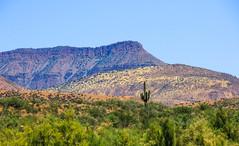 Lonely Saguaro (Buck--Fever) Tags: dutchwomenbuttearizona saguaros saguaro saltriverlakes rooseveltlake arizona arizonaskies arizonadesert arizonawonders earthnaturelife mountain landscape canon60d tamron18400lens