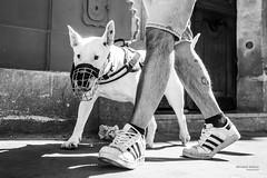 Street - Cage dog (François Escriva) Tags: street streetphotography paris france people candid olympus omd photo rue colors sidewalk black white bw noir blanc nb monochrome dog cage master tattoo legs sneakers sun man walking