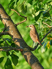 P6041541 (sen4dan) Tags: bird chirping singing naturesfinest bravo