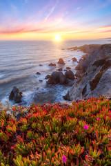 Bodega Head Ice Plant (optimalfocusphotography) Tags: sunburst usa landscape sunset nature water sea northerncalifornia sonomacounty beach ocean flowers sky california clouds coast sun waves seastacks