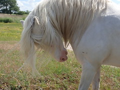 Please, don't put me in the picture (Landanna) Tags: horse paard hest dyr dier animal