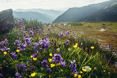Altay (showpx) Tags: altay russia flowers summer mountains camping sigma 35mm nikon d600