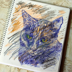 Photo of the day: 8.6.2019 (day 159) (House Of Secrets Incorporated) Tags: loa cat blackcat havanabrown cats pets animal animals siamese sketchoftheday sketch drawing drawingoftheday marumancroquis croquis maruman sketchbook art fabercastellgelatos biro ballpointpen pen blog blogger blogging kittensandsteamblogspotcom instagramkittensandsteam twitterhildebcm belgianblogger instagramcomkittensandsteam