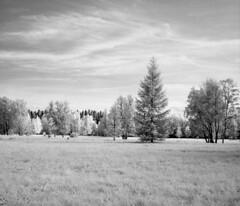 Infrared park (Sonofsono) Tags: infrared ir black bw white film finland moskva moskva5 120 sunny landscape