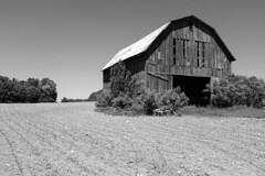 Old barn (Papaye_verte) Tags: québec canada barre grange field champ landscape paysage
