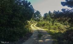 Paseo matinal (pedroramfra91) Tags: naturaleza nature exteriores outdoors camino road arboles trees