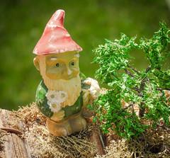 DSCN6192 (DianeBerky19) Tags: gnome nikon coolpixp1000 lightroom