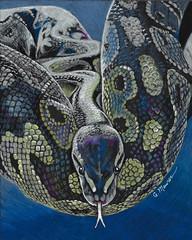 Sssssssst (GayleMaurer006) Tags: snake