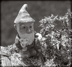 DSCN6192-2 (DianeBerky19) Tags: gnome nikon coolpixp1000 lightroom