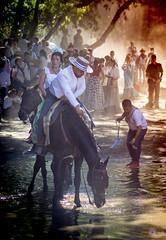 ROCIO BURRITO 19_299 (Almu_Martinez_Jiménez) Tags: rocío camino romería virgen fe devoción fervor caballos animales horse horses bienestar burro donkey mulo mula carro carreta charro ermita flamenco