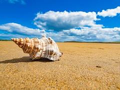 Sea shell (jim2302) Tags: sea shell sky clouds cloud olympus penf wideangle 918mm seascape landscape ultrawide sand beach strand ireland