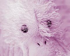 "Fuzzy Pink Googles (risaclics) Tags: macro mondays stuffed animal 60mmmacro june2019 nikond610d fluffy magenta monochrome toy ""childhoodtoys"" macromondays stuffedanimal juegos lookingcloseonfriday games"
