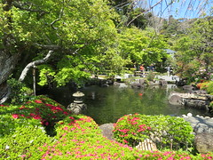 Temple garden, Hase-dera (Sean_Marshall) Tags: 鎌倉市 鎌倉 kamakura japan hasedera 海光山慈照院長谷寺 temple buddhisttemple