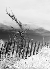 Shaped by Wind (arlene sopranzetti) Tags: 720nm infrared conversion bw monochrome beach dunes fence sea girt new jersey wind form