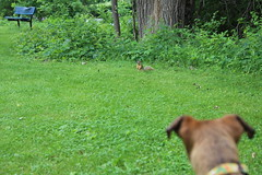 363/365/4015 (June 9, 2019) - Runyon and I watching the Fox Squirrels at Curtiss Park (June 8th & 9th, 2019 - Saline, Michigan)