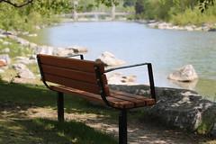 HBM Happy Bench Monday (davebloggs007) Tags: hbm happy bench monday calgary princes island park 2019