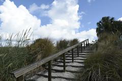 stepping into clouds (foto*grafo) Tags: manateecountyfl emersonpointpreserve parque park escalones steps juncos azul nubes cielo nikon 18140 d5600 clouds florida blue sky