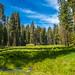 meadow (1 of 1)