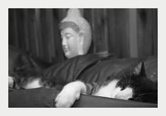 relax with buda (4paws2bw) Tags: animals pets canine feline petlovers rokinon sonya6500 monochrome blackandwhite gray