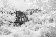 Tolt Bridge over Snohomish River - Infrared (RedRing Pictures) Tags: infra infrared black white bw bridge folliage heat landscape dream